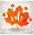 Autumn sale season design with maple leaf vector image