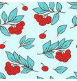 seamless pattern with red rowan berry vector image