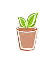 Flowerpot with green leafs plants vector image