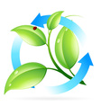 Fresh Green Leaves Icon vector image