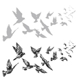 flying pigeons vector image