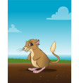 kangaroo rat in field vector image vector image