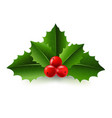 xmas holly berry vector image