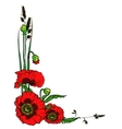 Poppies isolated on white vector image