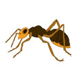 cartoon ant on a white background vector image
