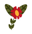 flower with plant leaves icon image vector image