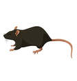 Rat nature vector image