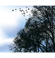 Flocks vector image