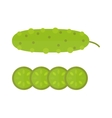 Fresh green cucumber cut sliced cooking vector image
