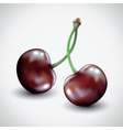 Pair of cherries isolated on white background vector image