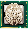 Brains inside vector image