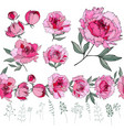 set with different peonies on white herbs plants vector image