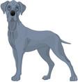 great danes dog vector image