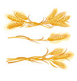 ears of wheat set vector image
