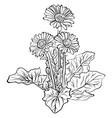 elegant decorative gerbera flowers vector image
