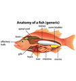 Anatomy of a fish vector image