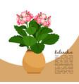 kalanchoe plant in pot banner vector image