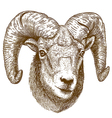 engraving ram head vector image