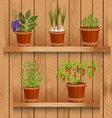 shelfs with collection of herbs in a flowerpots at vector image vector image