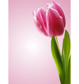 tulip poster vector image vector image