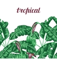 Seamless border with banana leaves Decorative vector image