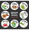 Spices and herbs labels Colored spicy set vector image