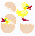 egg and newborn chicken vector image
