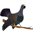 capercaillie on branch isolated white background vector image