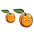 Cute happy orange apricot fruit vector image