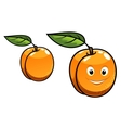 Cute happy orange apricot fruit vector image