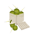 Fresh Green Coconuts in Wooden Cargo Box vector image