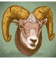 engraving ram head retro vector image