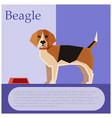 beagle colourful postcard vector image