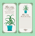 vintage label with aloe vera plant vector image