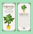 vintage label with dieffenbachia plant vector image