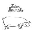 pig in graphic style vector image
