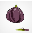 fig whole vector image