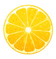 one orange fruite slice vector image