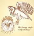Sketch harpia bird head in vintage style vector image