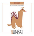 alphabet letter n and numbat vector image