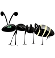 Insect ant on white vector image