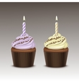 Set Birthday Cupcake with Cream Sprinkles Candle vector image
