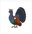 Wood grouse vector image