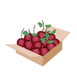 Sweet Fresh Apple in A Shipping Box vector image vector image