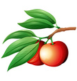 Fresg nectarine on the branch vector image