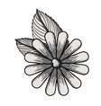 beautiful flower drawing isolated vector image