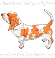 dog Basset Hound breed vector image
