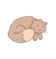 Sleeping Fluffy Grey Cat vector image
