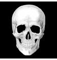 Human skull model object vector image