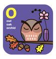 ABC owl oak orchid vector image